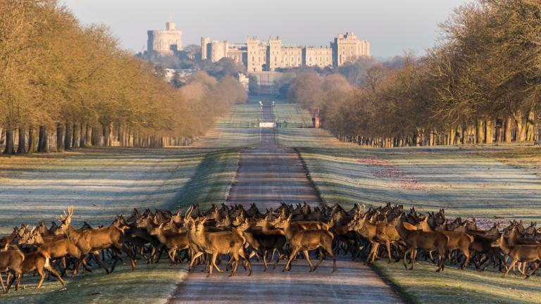 windsor-castle-deer-visit-britain.jpg